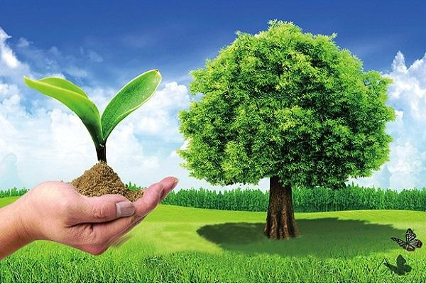 Un seminario en Qatar discute el medio ambiente desde el punto de vista del Corán